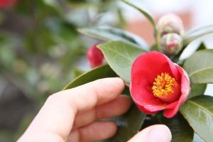 flowers-726532_1920